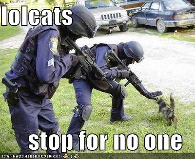 LOLCat Stops for no-one