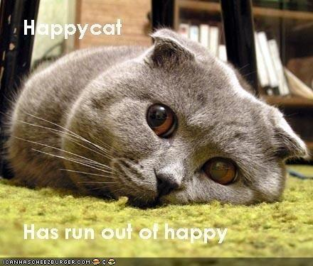 LOLcat: Happy Cat is Not Happy