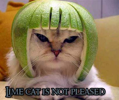 LOLcat: Lime Cat