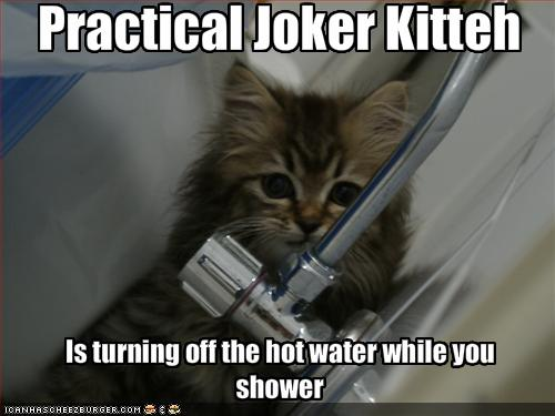 LOLcat: Practical Joke Cat