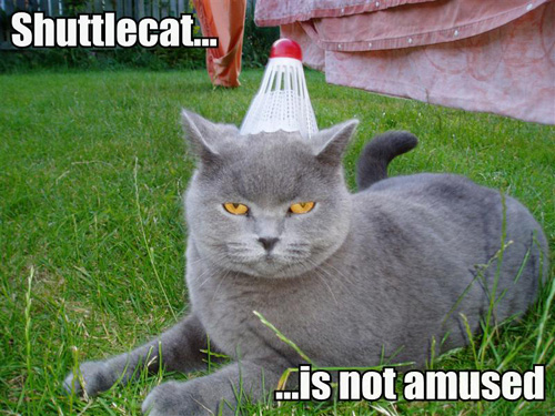 LOLcat: Shuttlecat is Not Amused