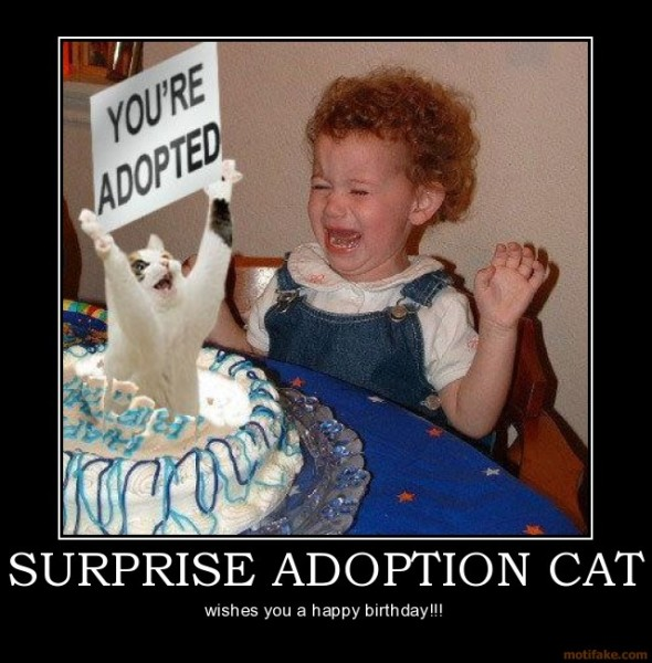 LOLcat: Surprised Adoption Cat