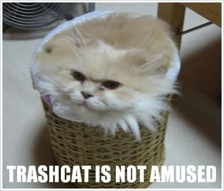 LOLcat: Trash Cat is Not Amused