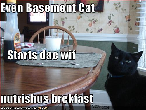 LOLcat: Even Basement Cat starts the day with a nutritious breakfast
