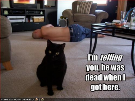 LOLcat: Basement Cat Denies Murder
