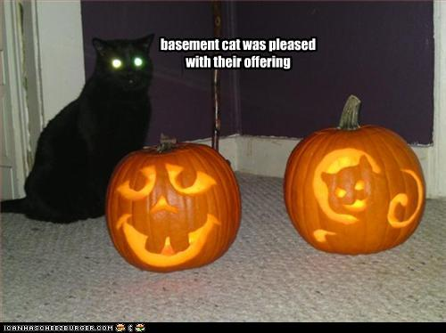 LOLcat: Basement Cat is pleased with with your offering