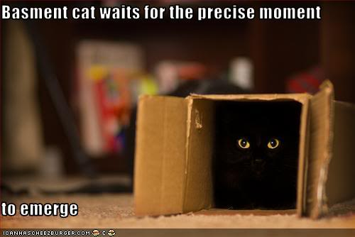 LOLcat: Basement Cat Waits For the Precise Moment to Emerge