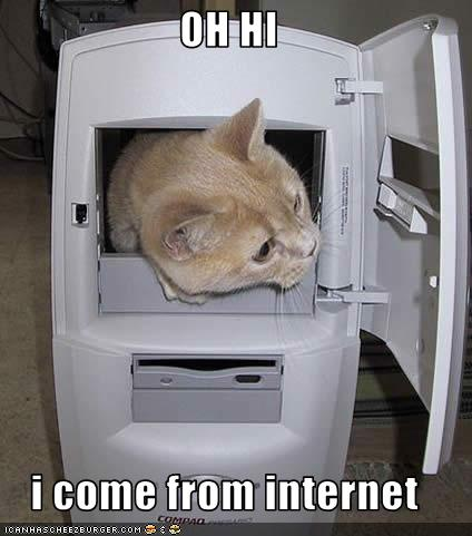 LOLcat: From the Internet